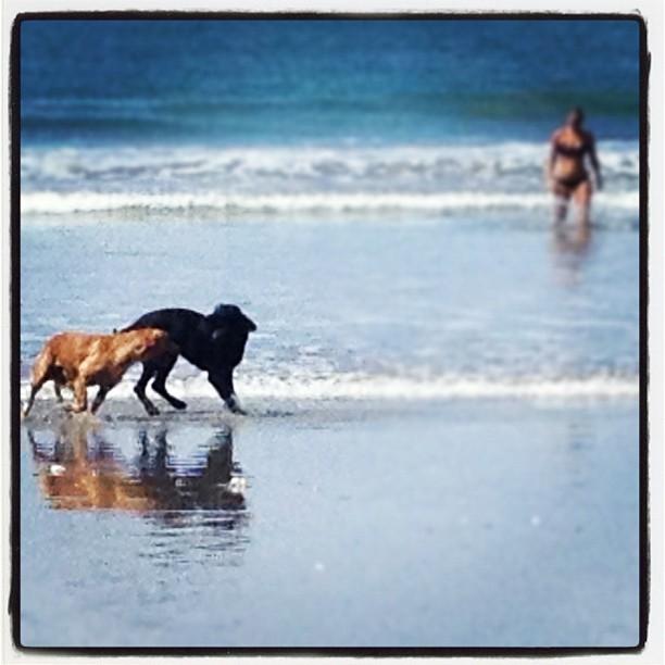 Beach Dogs, Samara, Costa Rica